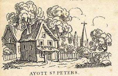 Ayott St Peter (cut-LR)